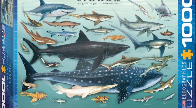 Sharks! A Puzzle Review