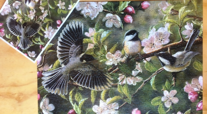 Cherry Blossoms and Chickadees! A Springtime Review