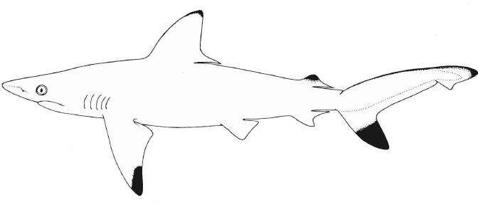 Shark Week Blogiversary – Thursday